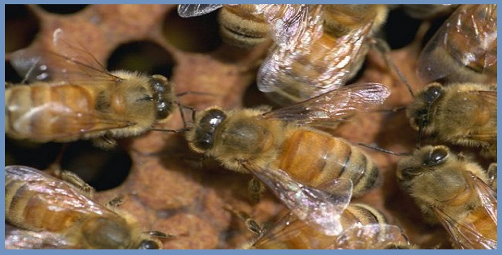 Đơn vị bắt ong tại Đà Nẵng