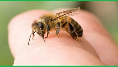 Công ty diệt ong tại Bình Phước