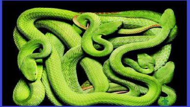 Công ty diệt rắn tại Bình Dương