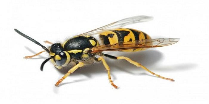 Công ty gỡ tổ ong uy tín tại Hà Nội