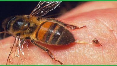 Dịch vụ bắt tổ ong tại Bắc Ninh