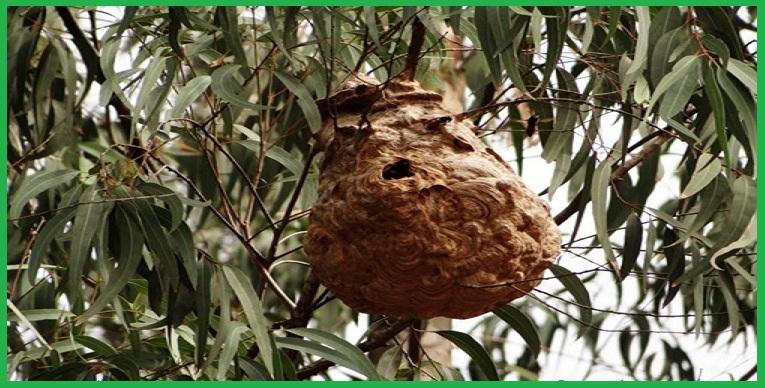 Trung tâm bắt tổ ong tại Bình Dương