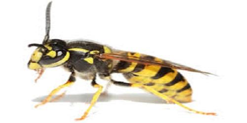 Trung tâm diệt ong tại nhà Cần Thơ